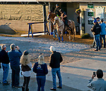 LOUISVILLE, KY - MAY 01: Justify, trained by Bob Baffert, heads to the track to exercise at Churchill Downs on May 1, 2018 in Louisville, Kentucky. (Photo by Scott Serio/Eclipse Sportswire/Getty Images)