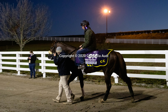 November 4, 2020: Momos, trained by trainer Christophe Clement, leaves the racetrack after exercising in preparation for the Breeders' Cup Juvenile Turf Sprint at Keeneland Racetrack in Lexington, Kentucky on November 4, 2020. Gabriella Audi/Eclipse Sportswire/Breeder's Cup/CSM