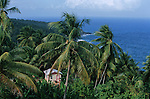 Carib case in the carib territory<br /> Case isolee dans la jungle du territoire Caraibe. Cote est de l ile de la Dominique.