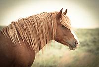 Summer Blonde - Wild Horse - Wyoming