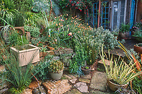 Container pots on patio with recycled concrete pavers; Roger Raiche Berkeley Maybeck Cottage garden