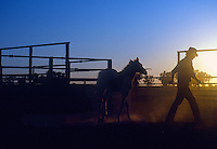 Stockman and Horses in the Outback of Australia