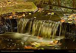 Woodland Waterfall, Descanso Gardens, La Canada Flintridge, California