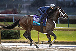November 1, 2018: Uncle Benny, trained by Jason Servis, exercises in preparation for the Breeders' Cup Juvenile Turf at Churchill Downs on November 1, 2018 in Louisville, Kentucky. Alex Evers/Eclipse Sportswire/CSM