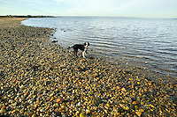 Dog along rocky beach.