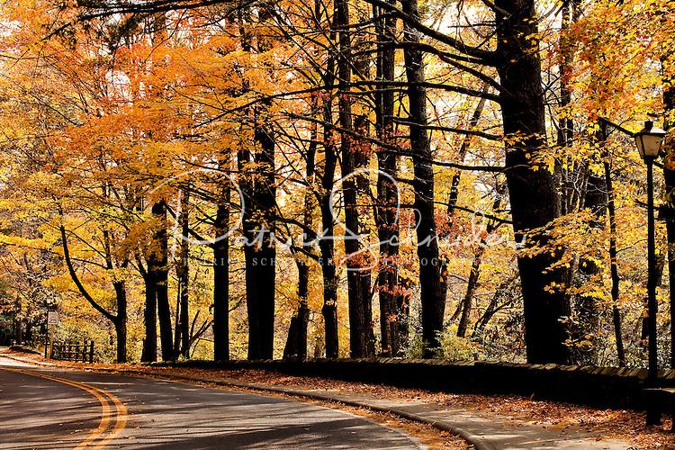 Trees along Chetola Lake, North Carolina.