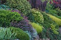 Shrub Foliage Garden