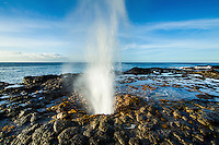 A blowhole spouts ocean water over tide pools on a rocky Kaua'i shoreline in the morning.