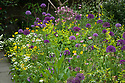 Allium 'Purple Sensation', Aquilegia, Buttercups, Cow parsley, and yellow Welsh poppies, Great Dixter, late May.
