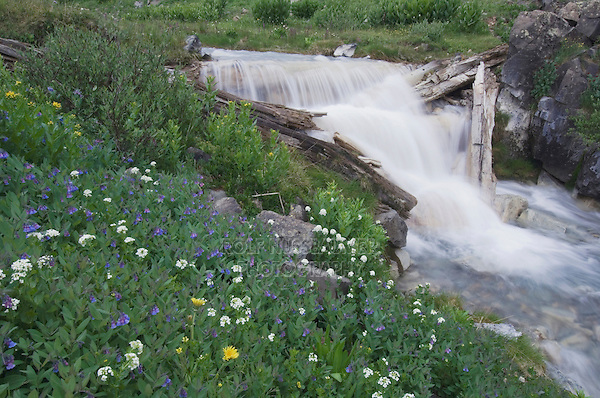 Mountain stream and wildflowers,Bluebells,Bittercress,Ouray, San Juan Mountains, Rocky Mountains, Colorado, USA, July 2007