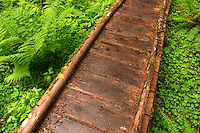 Boardwalk trail trough old growth temperate rain forest, Soleduck River Valley, Olympic National Park, Olympic Peninsula, Clallam County, Washington, USA