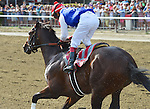 Unhappy (no. 11), ridden by Edgar Prado and trained by Maria Borell, wins the 31st running of the grade 1 King''s Bishop Stakes for three year olds on August 29, 2015 at Saratoga Race Course in Saratoga Springs, New York. (Bob Mayberger/Eclipse Sportswire)