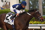 The filly Mystic Love with jockey Elvis Trujillo up, beats the boys and wins the Dania Beach (G3T)for two year olds at Gulfstream Park.  Hallandale Beach Florida. 12-15-2012