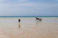 France, Manche, Cotentin, Mont-Saint-Michel Bay listed as World Heritage by UNESCO, Carolles, horse harnessed with a sulky on the beach // France, Manche (50), Cotentin, Baie du Mont-Saint-Michel classé au Patrimoine Mondial de l'UNESCO, Carolles, cheval attelé d'un sulky sur la plage