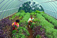 Couple picking herbs at herb farm on big island of hawaii