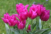 Gisela, FLOWERS, BLUMEN, FLORES, photos+++++,DTGK1972,#f#