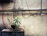 China, Hongkong, Mietwohnung, Pflanze, Asien, Stadt, Grossstadt, Illustration, Wohnen, Zimmerpflanze, Beton, Betonwand, grau, Hong Kong Flora (Bildtechnik: Farbprofil ECI-RGB)<br /> HKFDBD page 22-23<br />  ***Keine Social_Media Nutzung***<br /> <br /> Engl.: Asia, China, Hong Kong, urban flora, plant, concrete wall<br /> ***No social media use***