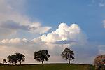 Europa, DEU, Deutschland, Baden Wuerttemberg, Odenwald, Neckar-Odenwald-Kreis, Mosbach-Reichenbuch, Baeume, Himmel, Wolken, Gewitterzellen, Kategorien und Themen, Natur, Umwelt, Landschaft, Jahreszeiten, Stimmungen, Landschaftsfotografie, Landschaften, Landschaftsphoto, Landschaftsphotographie, Wetter, Himmel, Wolken, Wolkenkunde, Wetterbeobachtung, Wetterelemente, Wetterlage, Wetterkunde, Witterung, Witterungsbedingungen, Wettererscheinungen, Meteorologie, Bauernregeln, Wettervorhersage, Wolkenfotografie, Wetterphaenomene, Wolkenklassifikation, Wolkenbilder, Wolkenfoto....[Fuer die Nutzung gelten die jeweils gueltigen Allgemeinen Liefer-und Geschaeftsbedingungen. Nutzung nur gegen Verwendungsmeldung und Nachweis. Download der AGB unter http://www.image-box.com oder werden auf Anfrage zugesendet. Freigabe ist vorher erforderlich. Jede Nutzung des Fotos ist honorarpflichtig gemaess derzeit gueltiger MFM Liste - Kontakt, Uwe Schmid-Fotografie, Duisburg, Tel. (+49).2065.677997, ..archiv@image-box.com, www.image-box.com]