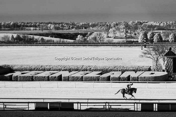 November 6, 2020: A horse gallops on the turf before Future Stars Friday racing begins at Keeneland Racetrack in Lexington, Kentucky, on Friday, November 6, 2020. Scott Serio/Eclipse Sportswire/Breeders Cup/CSM