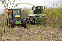 Harvesting 7 hectares of willow on Andrew Thompson's Embleton Old Hall Farm, Wingate, Co. Durham. The crop is to be used by Wilton 10, a 30 MW wood powered power station on Teesside. The power station will use 300,000 tonne of wood annually of which some 50,000 tonne will be short rotation coppice willow. The other wood supply will be recycled timber, timber processing products and forestry products..To grow 50,000 tonne of SRC  3,000 hactatres has to be planted.. Benefits of SRC from the farmers point of view is that once established it does not need replanting each year. When harvested the trees grow again from the remaining root stock. Fertiliser and chemical input is low compared to growing cereals.