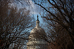 Barren trees stand in front of the U.S. Capitol ahead of President-Elect Joe Biden's Inauguration on January 19, 2021 in Washington, D.C..  Photograph by Michael Nagle