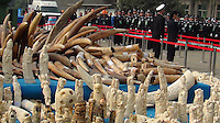 A handout photo from the Hong Kong-based 'AquaMeridian Conservation and Education Foundation' shows 6.2 tonnes of confiscated ivory prior to crushing by Chinese customs officials under the supervision of China's State Forestry Administration, Huangpu Port, Dongguan, China, 06 January 2014. After the United States, Philippines, Gabon, Kenya and Zambia, China is the latest country to crush its confiscated ivory as a symbolic gesture, sending a message to consumers, traffickers and poachers in Africa and Asia that the ivory trade is wrong and will make Africa's last remaining elephant populations extinct within 15 years. Scientists estimate that 25,000 elephants were illegally killed in 2012.