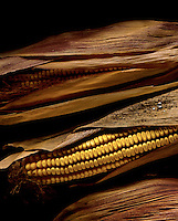 Dried corn.