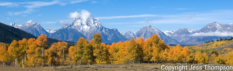 Panoramic image of Fall Colors in the Grand Tetons National Park