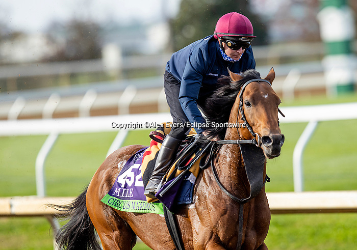 November 5, 2020: Circus Maximus, trained by trainer Aidan P. O'Brien, exercises in preparation for the Breeders' Cup Mile at Keeneland Racetrack in Lexington, Kentucky on November 5, 2020. Alex Evers/Eclipse Sportswire/Breeders Cup