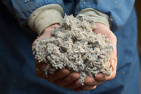 Pentre Solar village in Glanrhyd, North Pembrokeshire, is a environmentally friendly social housing project which will provide housing for tenants off the council housing register in Pembrokeshire.<br /> <br /> Picture shows insulation material made from recycled paper.