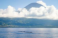 sperm whale, Physeter macrocephalus, Azores Island, Portugal, North Atlantic