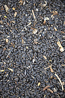 15-10-2021 Sunflower seeds for bird food <br />  ©Tim Scrivener Photographer 07850 303986<br />      ....Covering Agriculture In The UK....