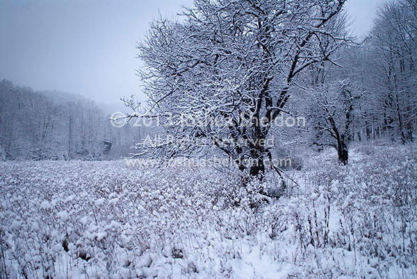 Snow covered field in winter