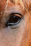 Close-up of horse's eye, Tonquin Valley, Jasper National Park, Alberta, Canada