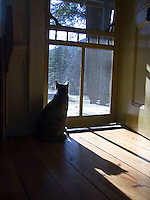 Silhouetted cat looking out open door<br />