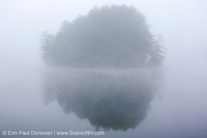 Group of trees at Moore Dam near a boat launch along the Connecticut River, in Littleton, New Hampshire USA in foggy conditions.