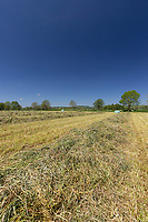 30-5-2021 Haylage in Rutland <br /> ©Tim Scrivener Photographer 07850 303986<br />      ....Covering Agriculture In The UK....
