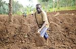 Rwanda - Potato farmers planting their crop on near the northern border with the Democratic Republic of the Congo