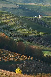 Italien, Piemont, Region Langhe, malerische Herbstlandschaft, Weinbau   Italy, Piedmont, Region Langhe, picturesque autumn landscape, wine growing
