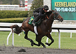 April 03, 2014: Hip 77 Lemon Drop Kid - Beautyandthebeast (GB) consigned by Wavertree Stables worked 1/8 in 10:0.  Candice Chavez/ESW/CSM