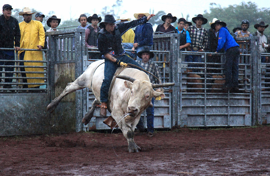 """AA bull rider competes in the bullriding competition at the """"Panaewa Stampede Rodeo"""" at the Panaewa Equestrian Center in Hilo, Hi. Participating in rodeos has always been a large part of the Hawaiian cowboy culture which served to bring cowboys together outside of work to have fun and bond.  """"There were Japanese cowboys, Phillipino cowboys, Hawaiian cowboys, Portuguese cowboys, Chinese cowboys...We all ate together, played together, rode horses together, rodeod together.  It was all family,"""" says Sonny Keakealani of his younger years as a cowboy and the community he was part of."""