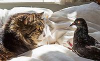 2012-09-18_Cat and Pigeon-Ziggy and Jean Minou