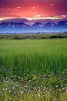Sunset at Alaganik Slough, Copper River Delta, Cordova, Chugach National Forest, Alaska.