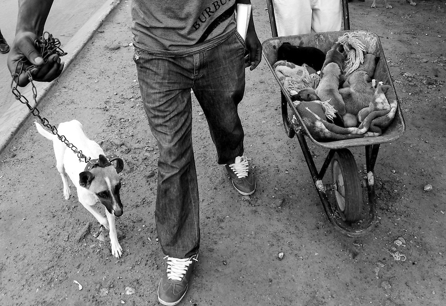 A female dog and her puppies arrive for treatment at a mobile CLAW clinic in Snake Park, South Africa. IFAW's CLAW program provides veterinary services to cats and dogs in some of the poorest shantytowns outside of Johannesburg, South Africa. 2/27/12 Julia Cumes/IFAW