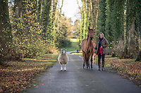 The Countess of Carnarvon with a horse on a leading rein and a sheep in tow