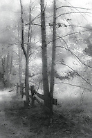 Foggy scene of old wooden fence in hardwood forest