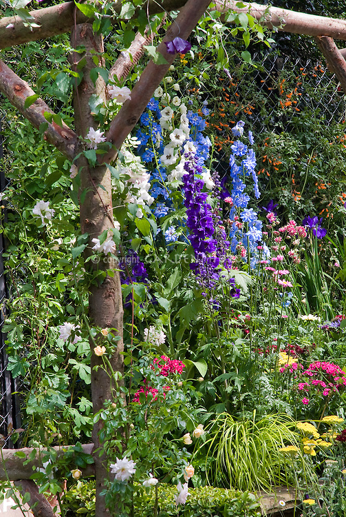 Delphiniums, climbing roses Rosa on trellis arbor of rustic wood, cottage garden design with rambling lush flowers, Dianthus, Achillea, ornamental grass Hakonechloa, iris, wide mixture of types of plants together, blue, purple, red, yellow, vines, perennials, fence