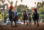 Shakin It Up with jockey Mike Smith up defeats Governor Charlie and Martin Garcia to win the 2014 running of the Strub Stakes at Santa Anita Park in Arcadia, California on January 18,  2014.