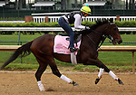 LOUISVILLE, KY - APRIL 23: Carina Mia (Malibu Moon x Miss Simpatia, by Southern Halo) gallops on the track at Churchill Downs while training for the Kentucky Oaks. Owner Three Chimneys Farm LLC, trainer William I. Mott. (Photo by Mary M. Meek/Eclipse Sportswire/Getty Images)