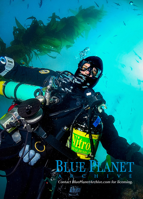 Technical scuba diver closeup with kelp, Macrocystsis pyrifera, in background, Anacapa Island, Channel Islands, California, USA, Pacific Ocean, MR